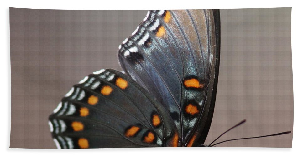 Butterfly Bath Sheet featuring the photograph Bee And Me by Travis Truelove