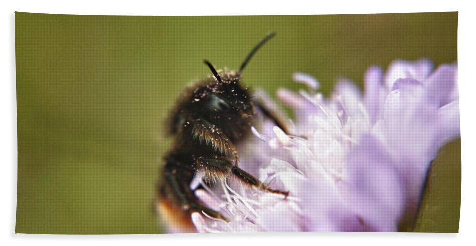 Bee Hand Towel featuring the photograph Bee In Pollen by Vicki Field