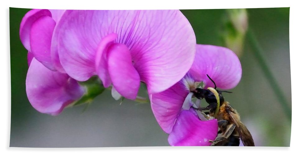 Bath Sheet featuring the photograph Bee In The Pink - Greeting Card by Mark Valentine