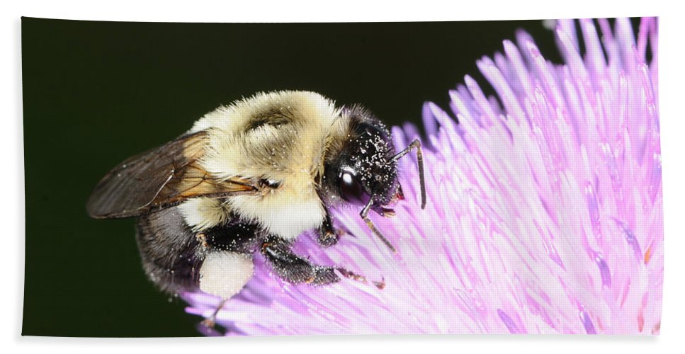 Bee Hand Towel featuring the photograph Bee On Flower by Paul Ward