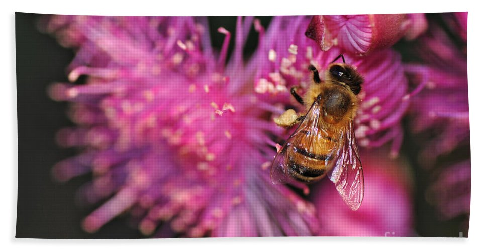 Photography Bath Sheet featuring the photograph Bee On Lollypop Blossom by Kaye Menner