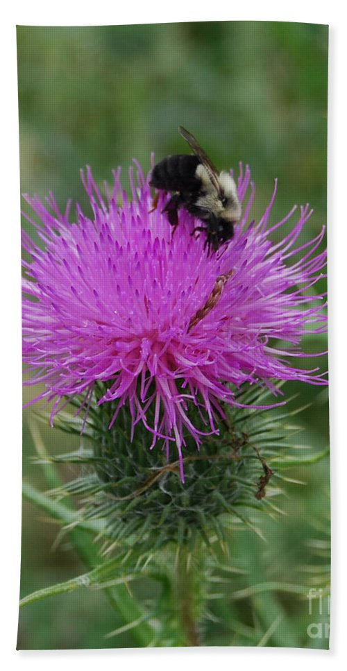 Thistle Bath Sheet featuring the photograph Bee On Thistle by Grace Grogan