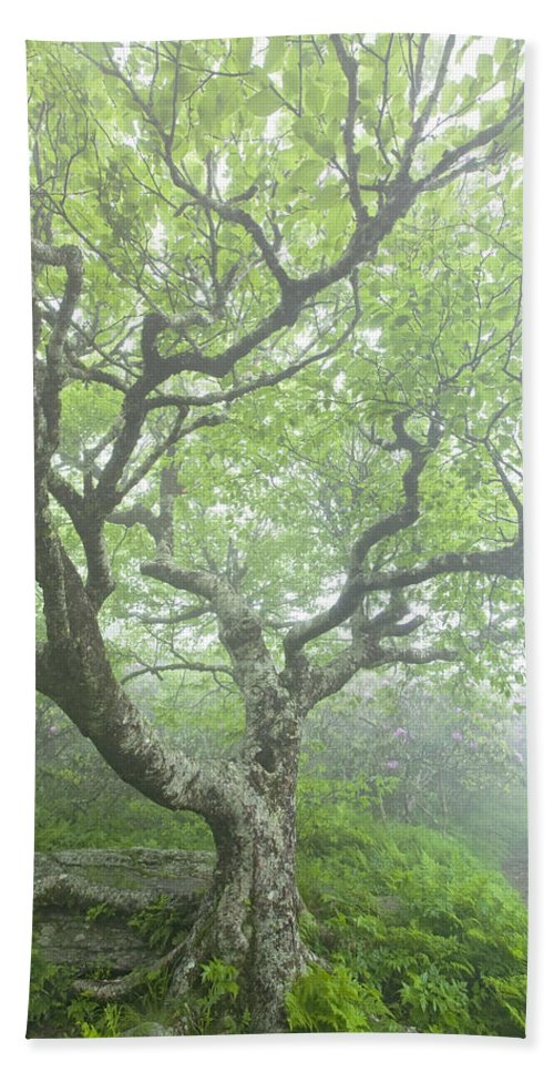 Beech Tree Bath Sheet featuring the photograph Beech At Craggy by Rob Travis