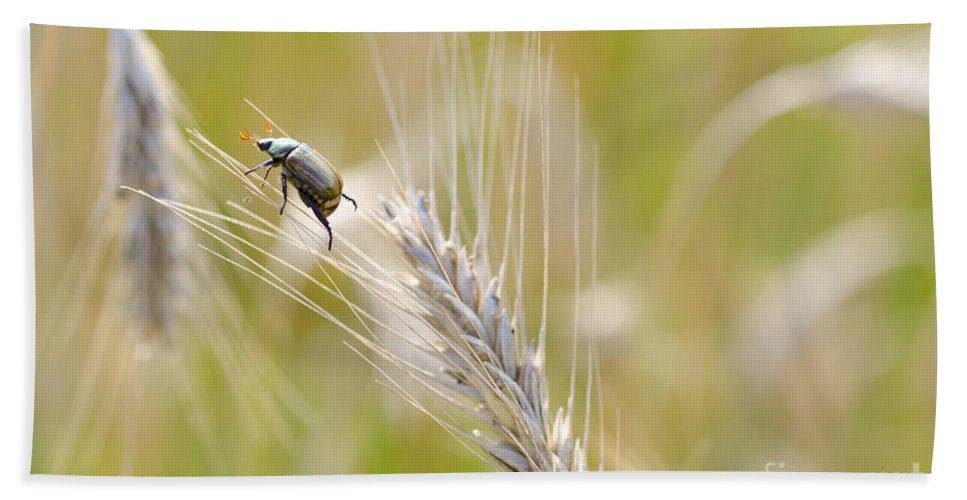 Beetle Bath Sheet featuring the photograph Beetle On The Wheat by Mats Silvan