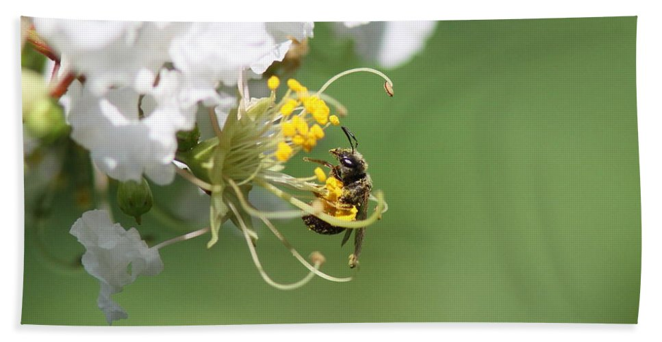 Honeybee Bath Sheet featuring the photograph Being A Bee by Travis Truelove