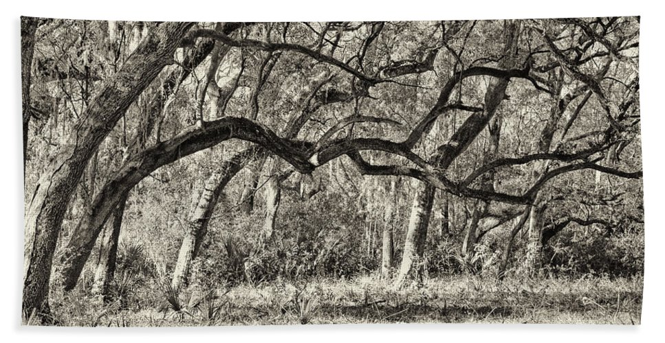 Beaufort County Bath Sheet featuring the photograph Bent Trees Sepia Toned by Phill Doherty