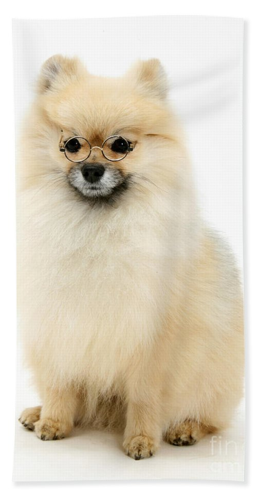 Animal Hand Towel featuring the photograph Bespectled Pomeranian by Mark Taylor