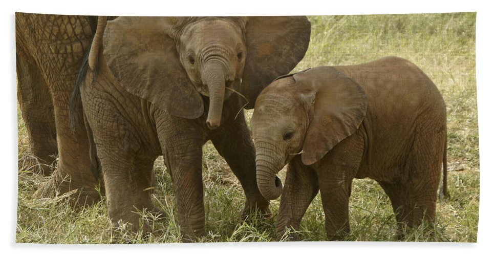 Africa Bath Sheet featuring the photograph Best Buddies by Michele Burgess