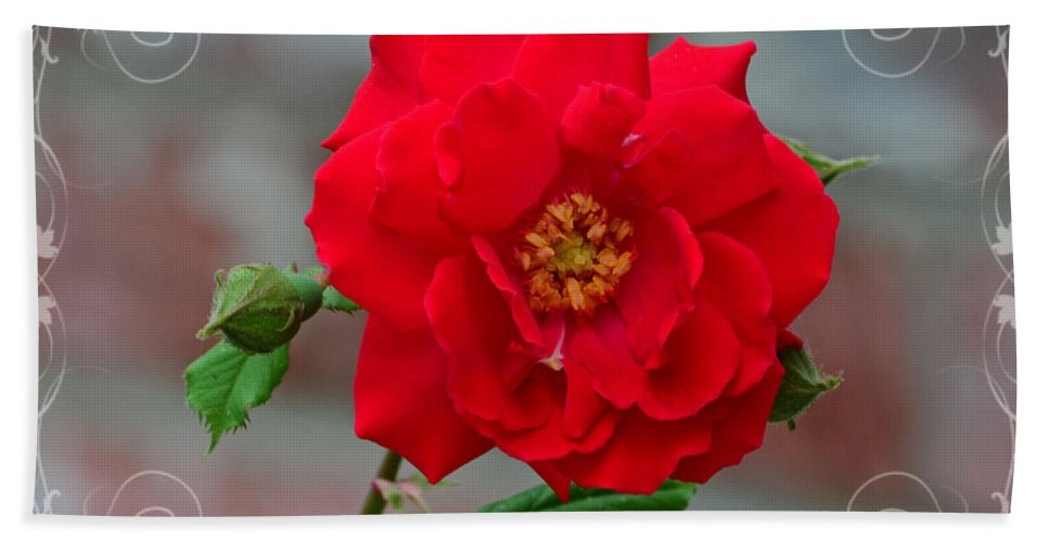 Nature Hand Towel featuring the photograph Betty's Red Rose by Debbie Portwood