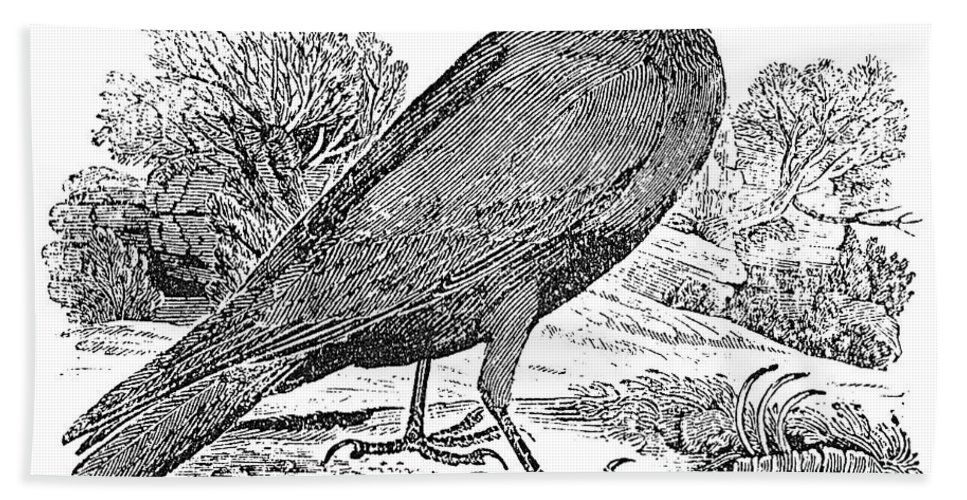 19th Century Hand Towel featuring the photograph Bewick: Raven by Granger