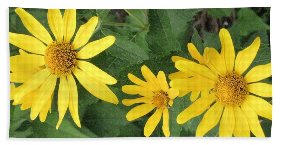 Daisies Hand Towel featuring the photograph Big And Small by Sonali Gangane