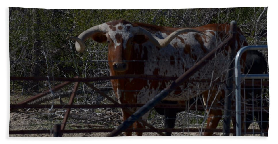 Animal Hand Towel featuring the photograph Big Bull Long Horn by Donna Brown