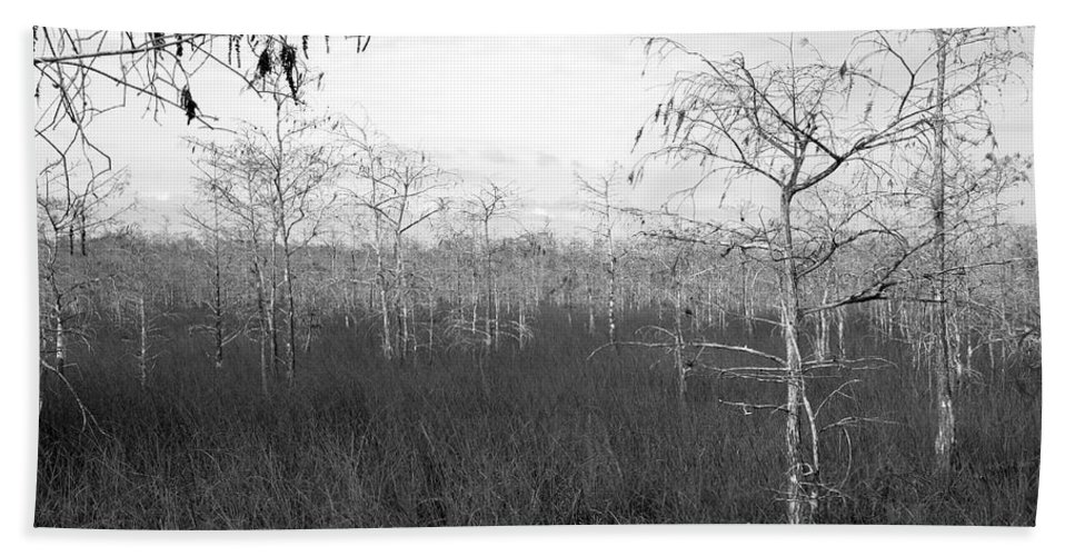 Fine Art Photography Hand Towel featuring the photograph Big Cypress Winter by David Lee Thompson