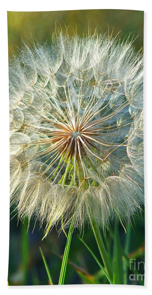 Dandelions Bath Sheet featuring the photograph Big Dandelion Seed by Randy Harris