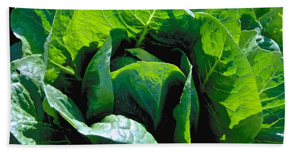 Green Hand Towel featuring the photograph Big Green Cabbage by Eric Tressler