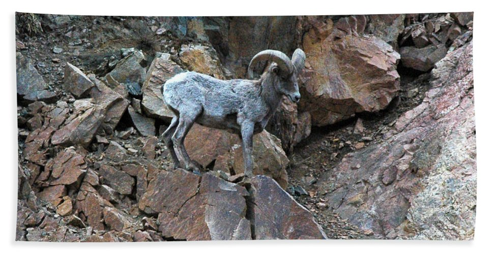 Colorado Hand Towel featuring the photograph Big Horn Sheep by Kimberlee Fiedler