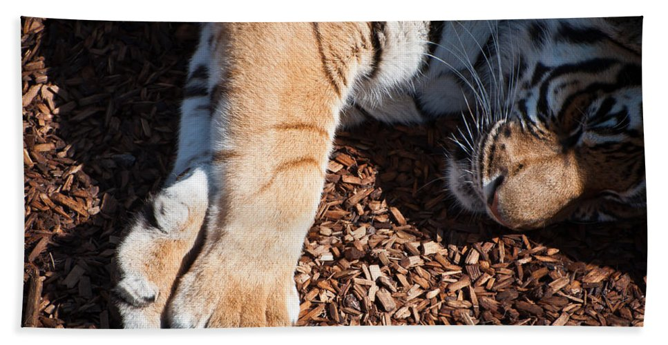 Wild Bath Sheet featuring the photograph Big Paws by Colleen Coccia