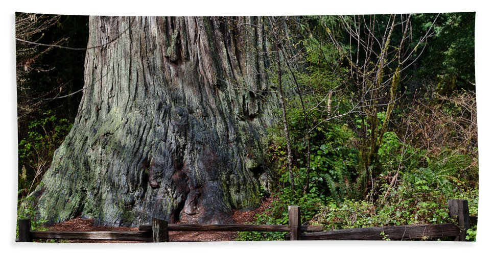 Redwoods Hand Towel featuring the photograph Big Tree by Greg Nyquist