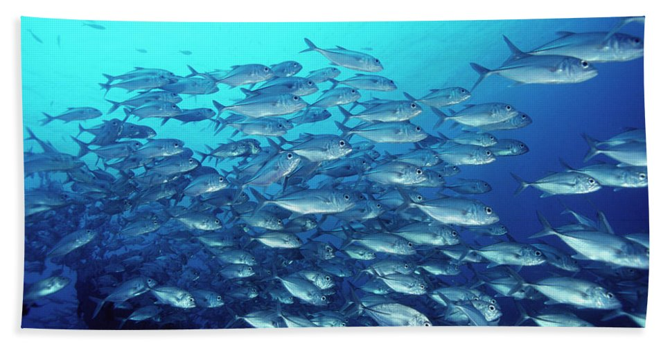 Mp Hand Towel featuring the photograph Bigeye Trevally Caranx Sexfasciatus by Mike Parry