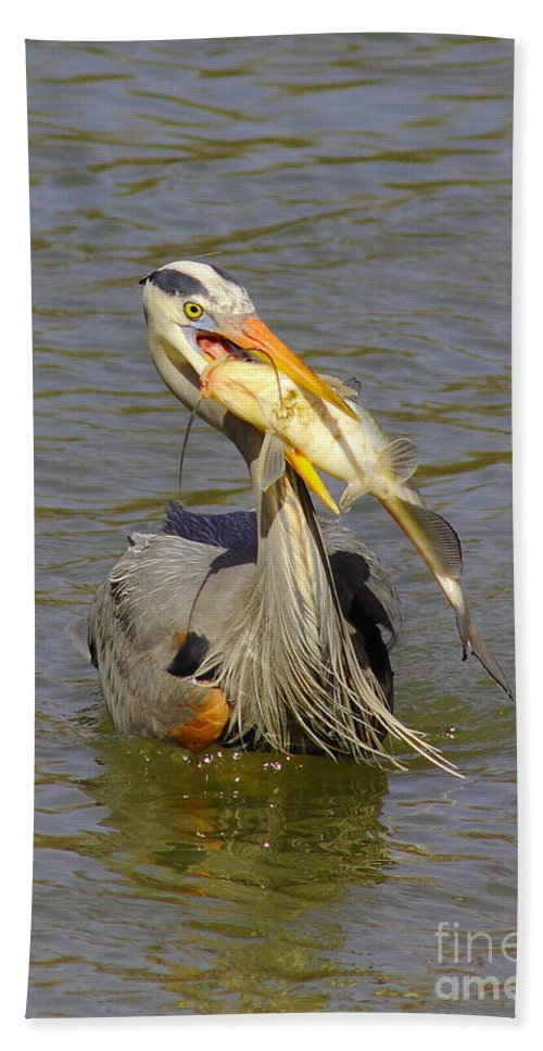 Great Blue Bath Sheet featuring the photograph Bigger Fish To Fry by Robert Frederick