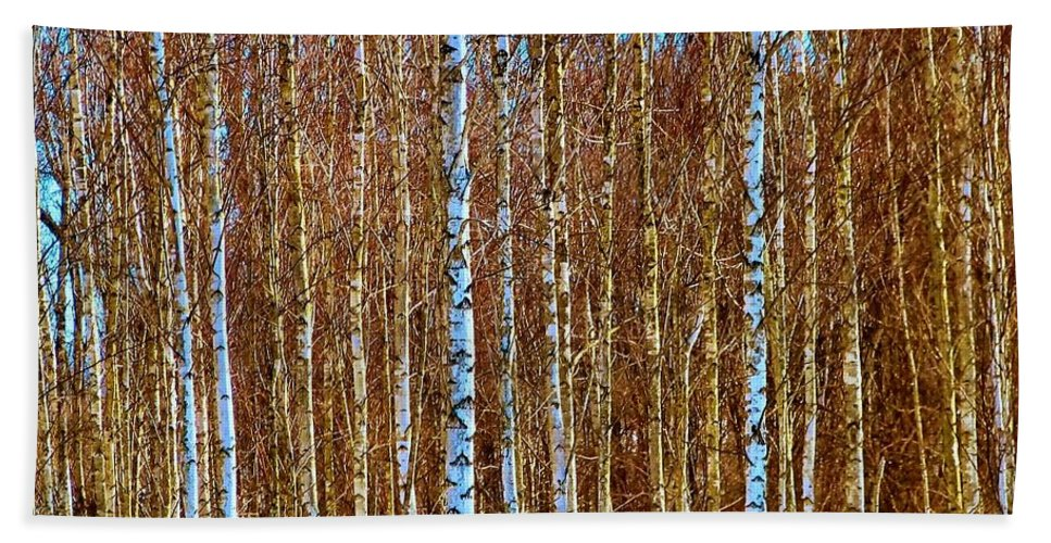 Field Hand Towel featuring the photograph Birch by Art Dingo