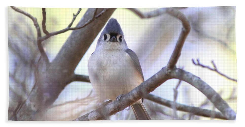 Nature Bath Sheet featuring the photograph Bird - Tufted Titmouse - Busted by Travis Truelove