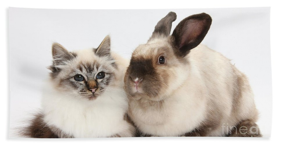 Nature Hand Towel featuring the photograph Birman Cat And Colorpoint Rabbit by Mark Taylor