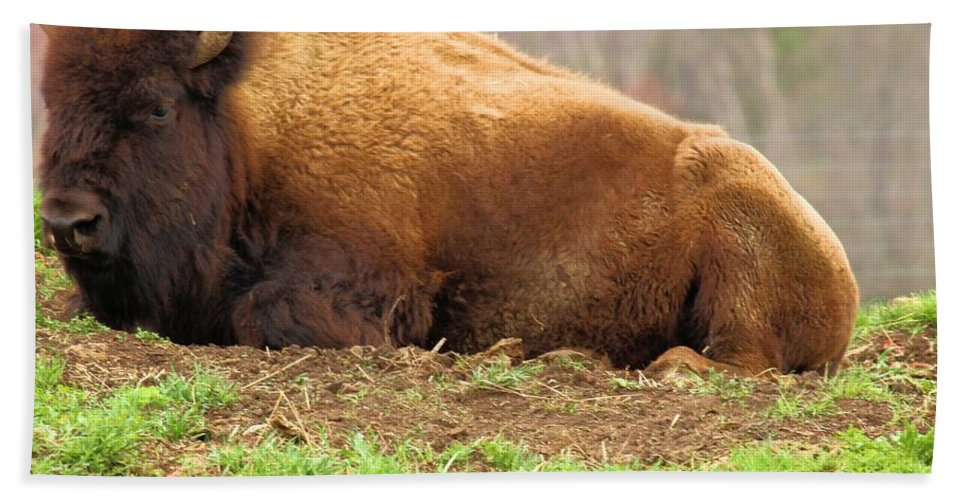 Bison Hand Towel featuring the photograph Bison At Rest by Adam Jewell