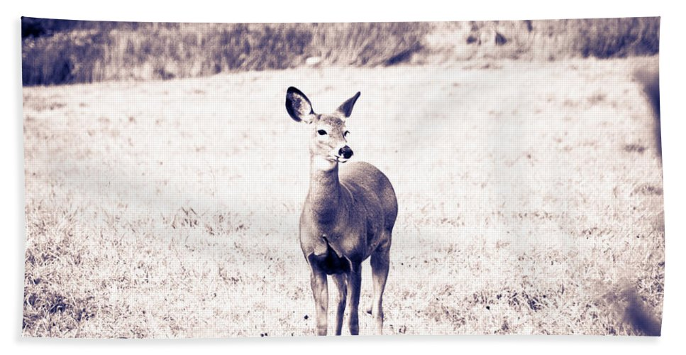 Deer Hand Towel featuring the photograph Black And White Deer by Cheryl Baxter