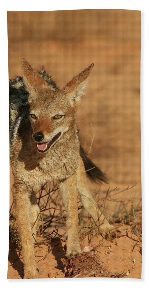 Africa Bath Sheet featuring the photograph Black-backed Jackal by Bruce J Robinson