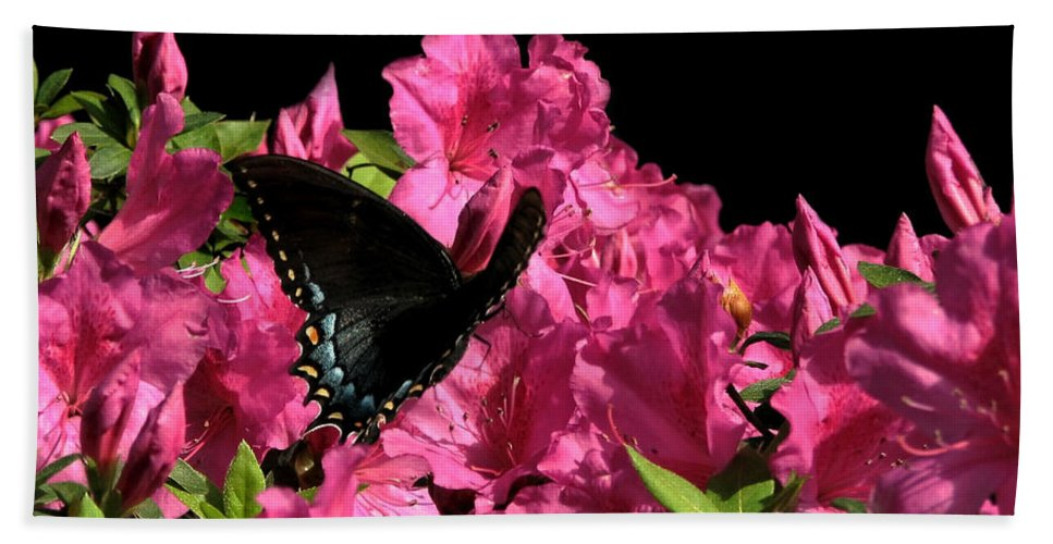 Nature Bath Sheet featuring the photograph Black Beauty In Flight by Peg Urban