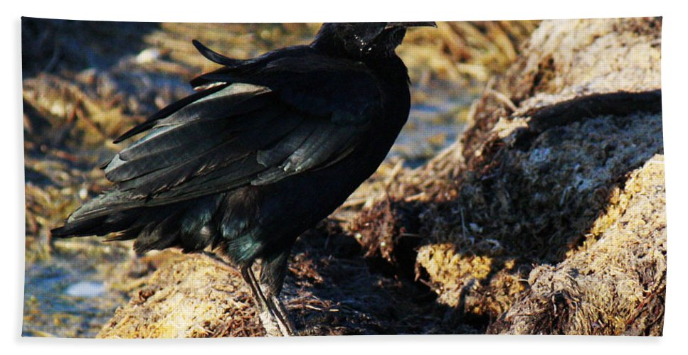 Roena King Bath Sheet featuring the photograph Black Bird With Yellow Eyes by Roena King