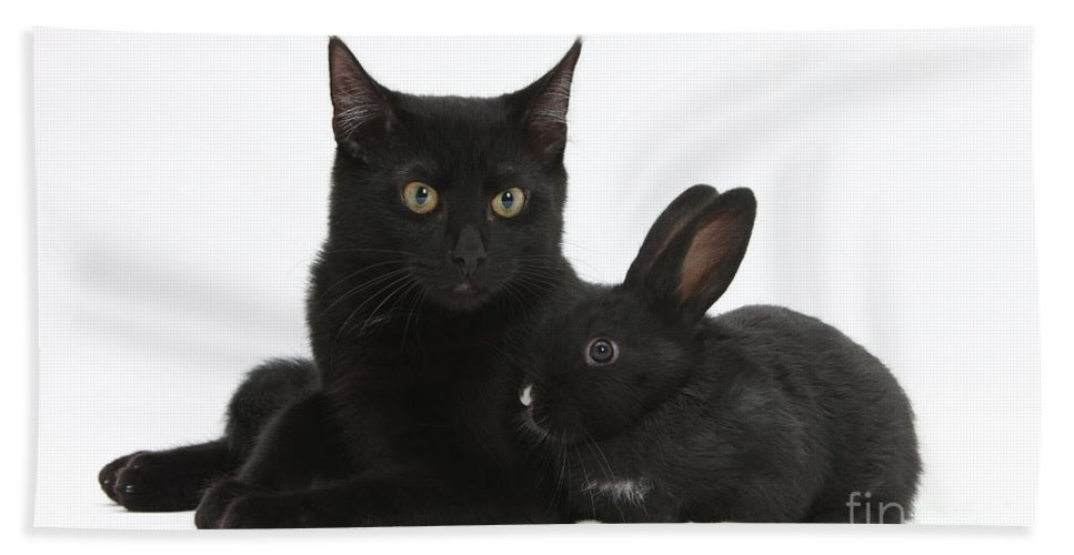 Animal Hand Towel featuring the photograph Black Cat And Rabbit by Mark Taylor