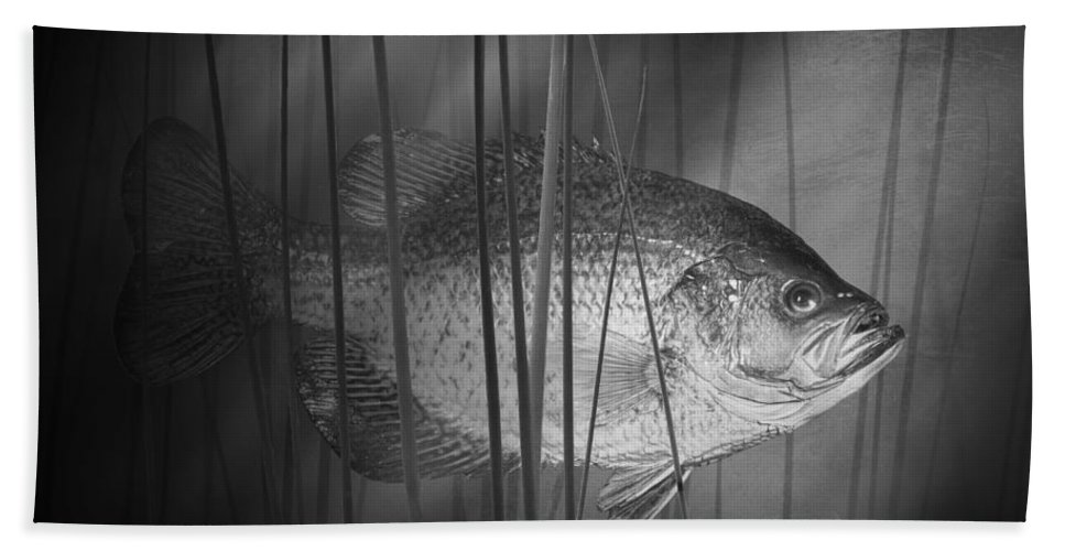 Art Bath Sheet featuring the photograph Black Crappie Or Speckled Bass Among The Reeds by Randall Nyhof