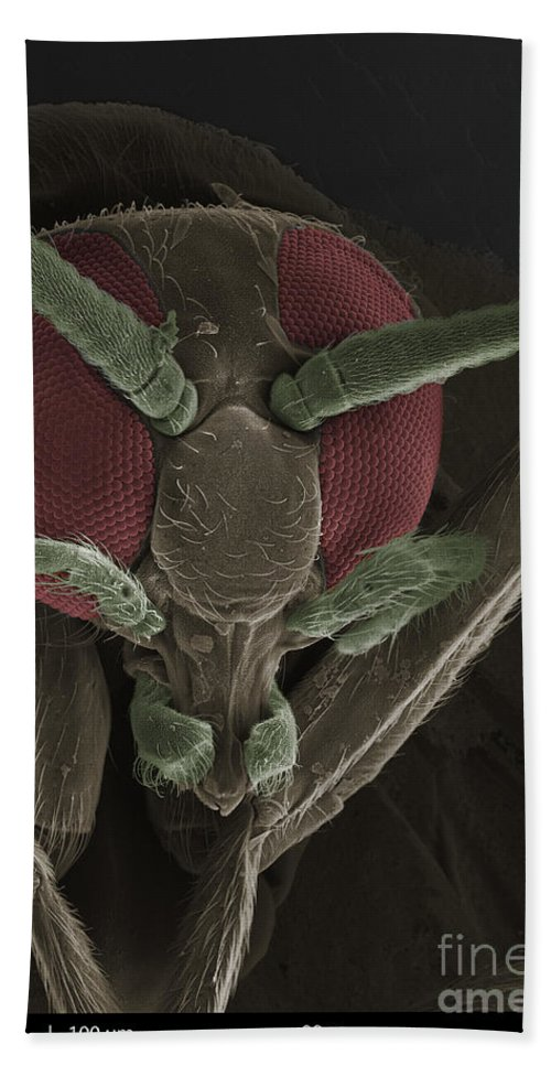 Sem Hand Towel featuring the photograph Black Fly, Sem by Ted Kinsman
