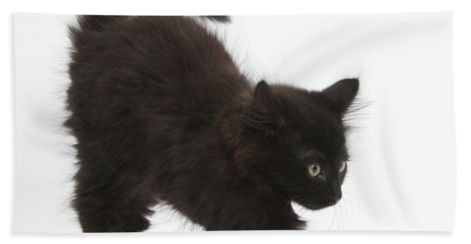 Nature Hand Towel featuring the photograph Black Kitten Stretching by Mark Taylor