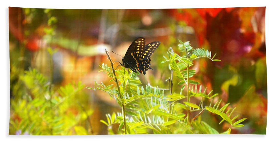 Macro Hand Towel featuring the photograph Black Swallow Tail Butterfly In Autumn Colors by Peggy Franz