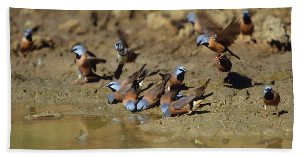 Finch Bath Sheet featuring the photograph Black-throated Finches At Waterhole by Bruce J Robinson