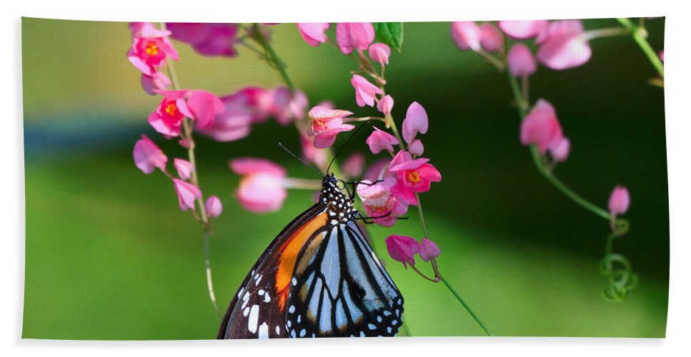 Pretty Bath Sheet featuring the photograph Black Veined Tiger Butterfly by Louise Heusinkveld