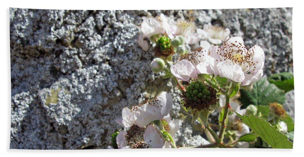 Blackberry Bath Sheet featuring the photograph Blackberry On The Rock Square Format by Ausra Huntington nee Paulauskaite