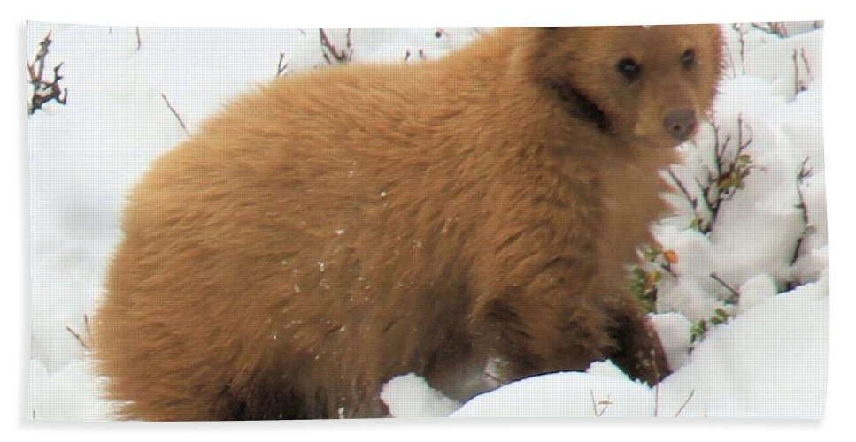 Black Bears Hand Towel featuring the photograph Blondie by Adam Jewell