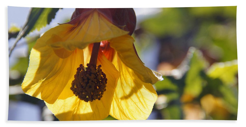 Bloom Hand Towel featuring the photograph Bloom by Mick Anderson