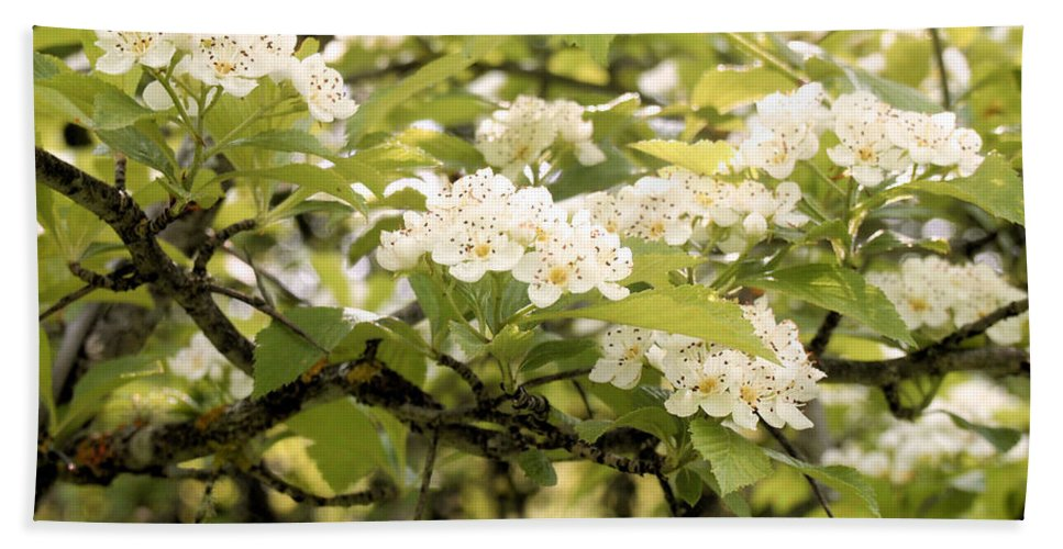 Hawthorn Bath Sheet featuring the photograph Blossoming Hawthorn Tree by Angie Rea
