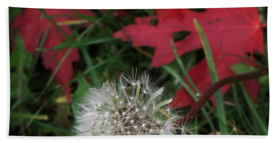 Dandelion Hand Towel featuring the photograph Blow Away by Ian MacDonald