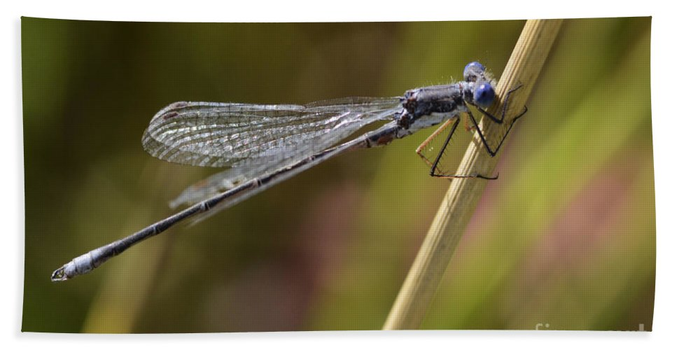 Blue Dasher Hand Towel featuring the photograph Blue Dasher by Bob Christopher