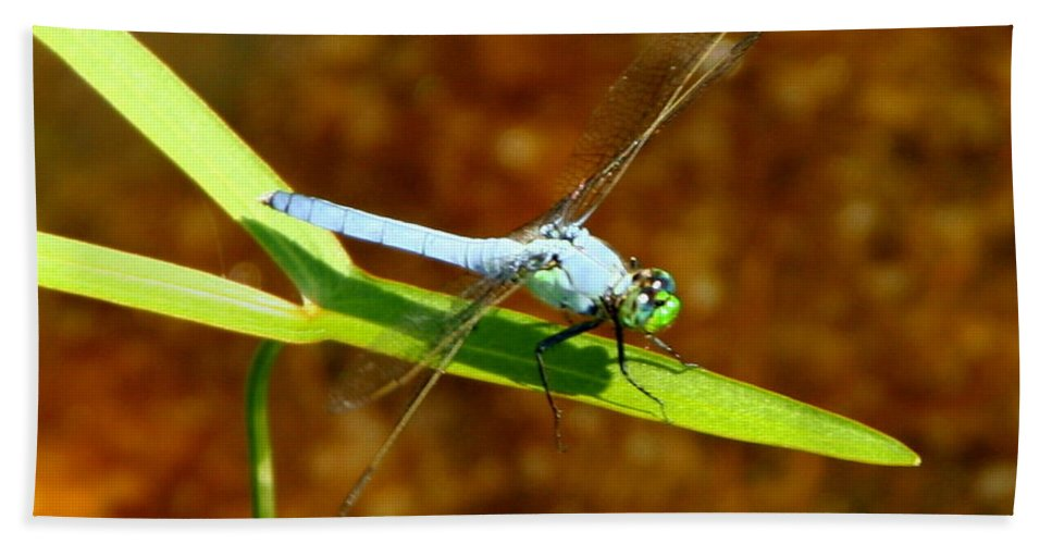 Blue Dasher Bath Sheet featuring the photograph Blue Dasher Dragonfly by Laurel Talabere