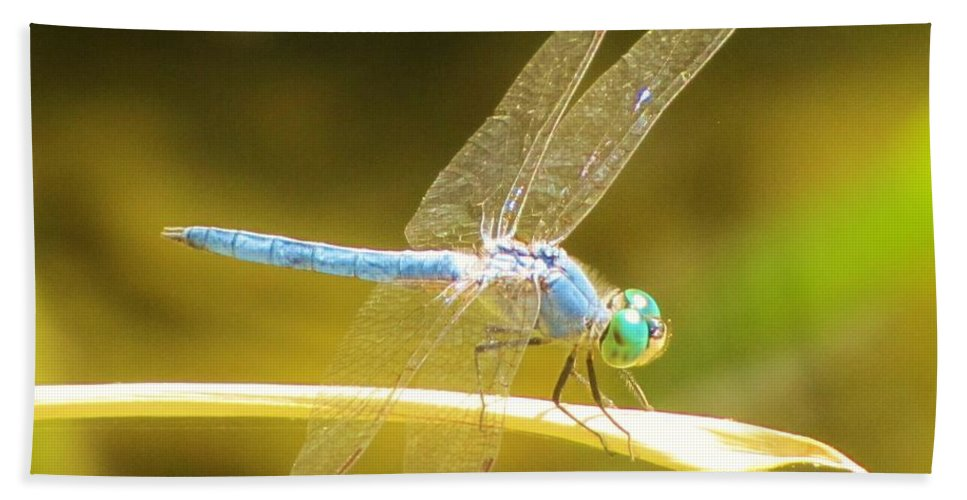 Dragonfly Bath Sheet featuring the photograph Blue Dragonfly by Michelle Cassella