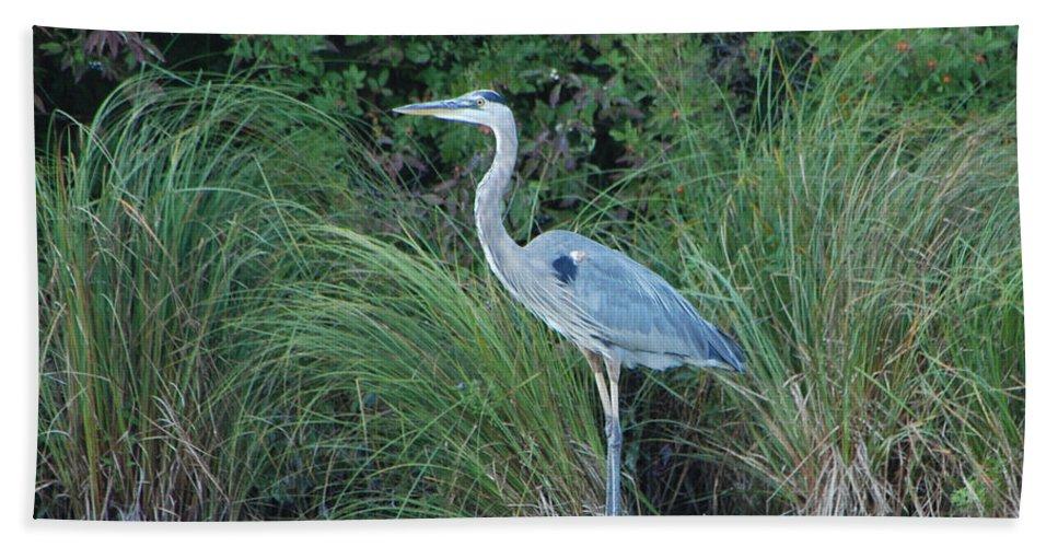 Blue Heron Bath Sheet featuring the photograph Blue Heron by Grace Grogan