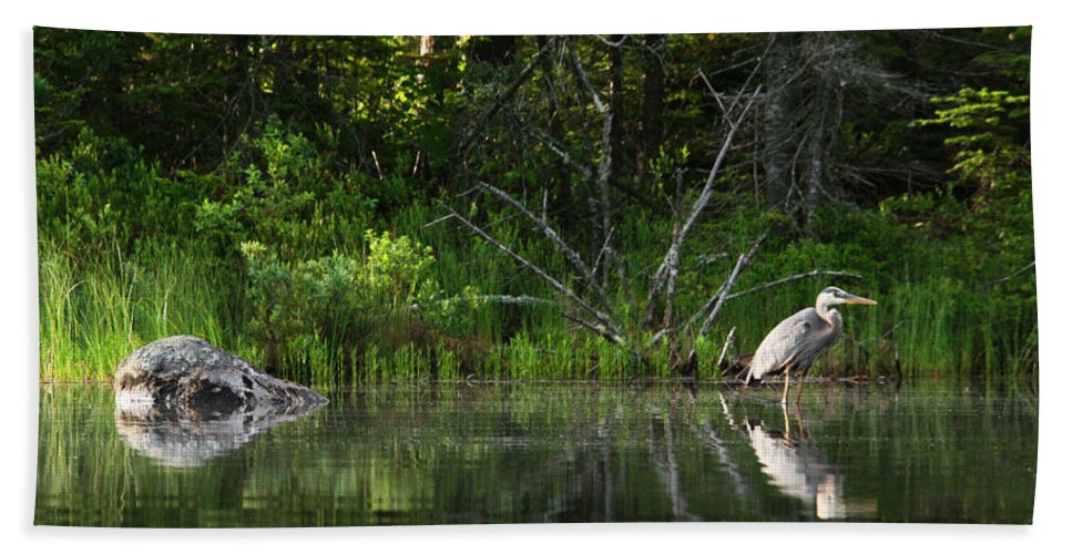 White Mountain Hand Towel featuring the photograph Blue Heron Long Pond Wmnf by Benjamin Dahl