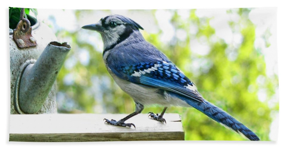 Nature Bath Sheet featuring the photograph Blue Jay by Debbie Portwood